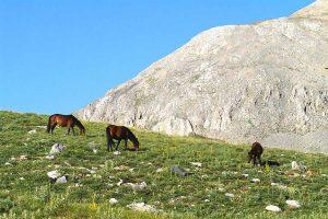 Wild_horses,_Bolkar_Mts.