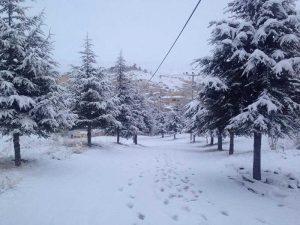 cappadocia-snow-mustafapasa-trees